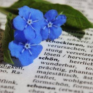 Vorschaubild Wöör op plattdüütsch - Erstellung einer niederdeutschen Wörtersammlung mit Book Creator