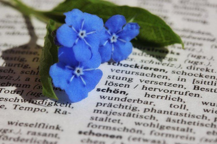 Wöör op plattdüütsch - Erstellung einer niederdeutschen Wörtersammlung mit Book Creator