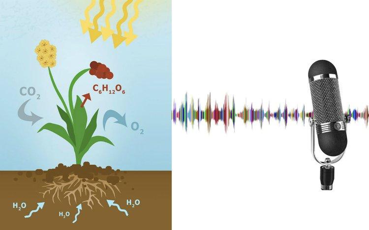 Einen wissenschaftlichen Audio-Podcast planen und erstellen