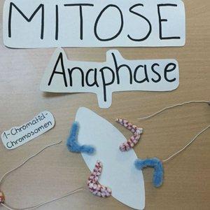 Vorschaubild Erstellung eines Stop-Motion-Videos am Beispiel der Mitose